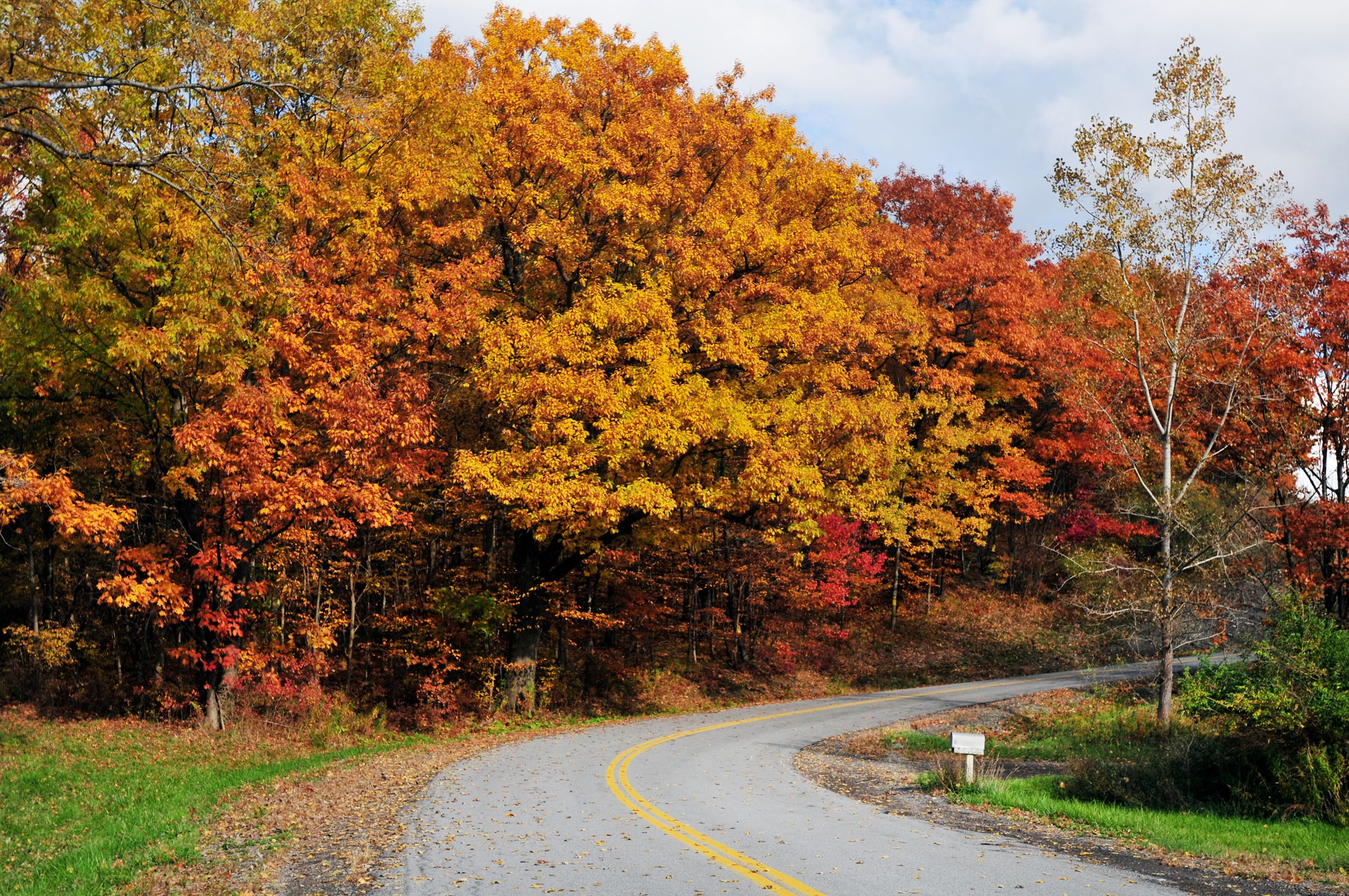 Scenic photo of a curving fall road lined with bright, colorful, crisp fall leaves.